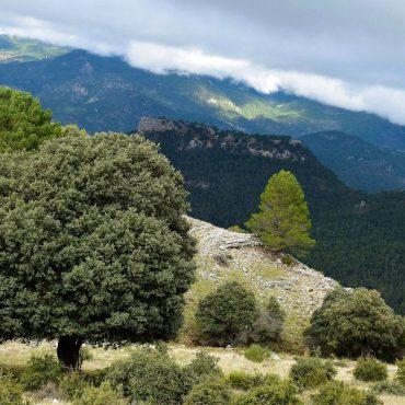 Vinos Castilla la Mancha | Turismo Riopar
